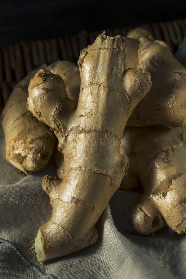 Brown crudo Ginger Root orgánico fotografía de archivo