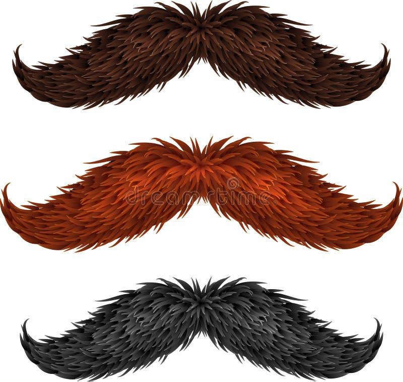 Brown, czerń i imbir, odizolowywaliśmy wąsy ustawiających ilustracja wektor