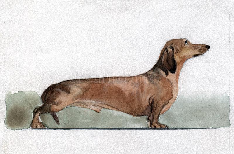 Dachshund painted in watercolor in profile royalty free stock photos