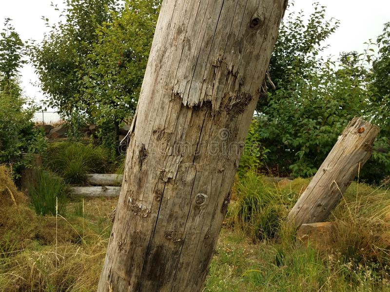 Brown dead tree trunks and green trees and grasses. Brown leaning dead tree trunks and green trees and grasses stock photography