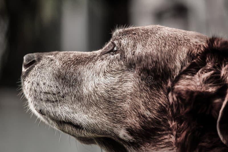 Brown Dog Free Public Domain Cc0 Image