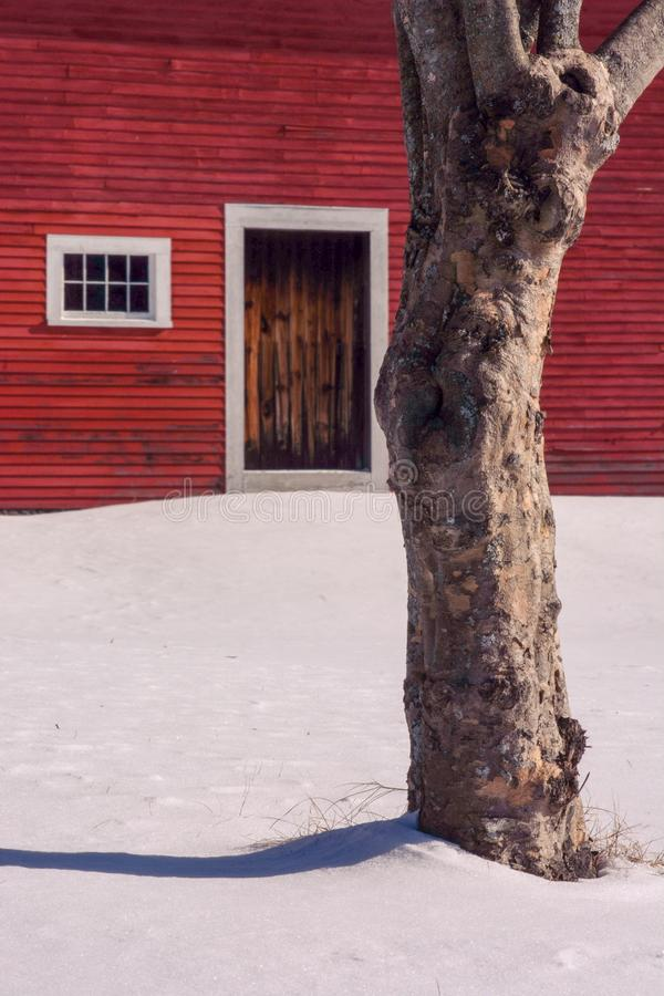 Tree body waits patiently for door of red barn to open. stock photos