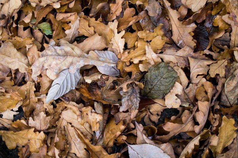 Brown Dried Leaf Free Public Domain Cc0 Image