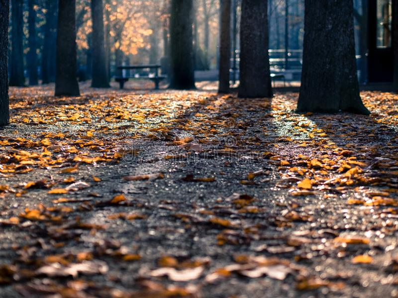 Brown Dried Leaves On Black Asphalt Road During Daytime Free Public Domain Cc0 Image