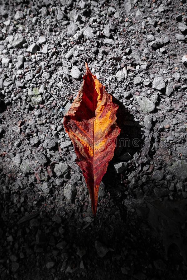 Brown dry leaves on the ground in autumn. In the nature stock photography