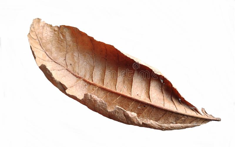 Brown dry leaves,isolated autumn foliage patterns, leaf foliage material on a white background. stock illustration