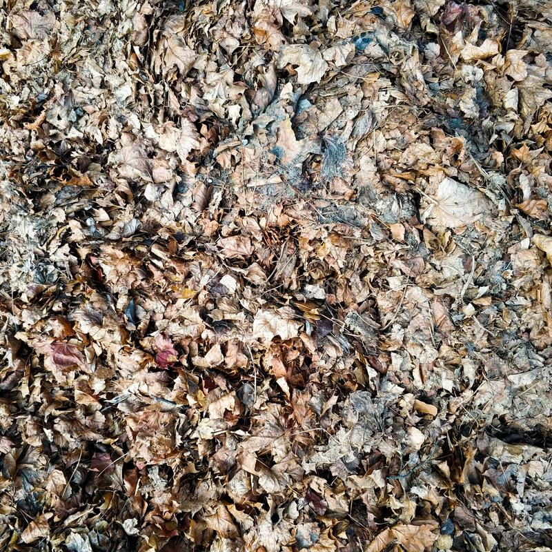 Brown dry leaves lie on the ground. View from above. Brown dry leaves lie on the ground. Autumn textural background stock images