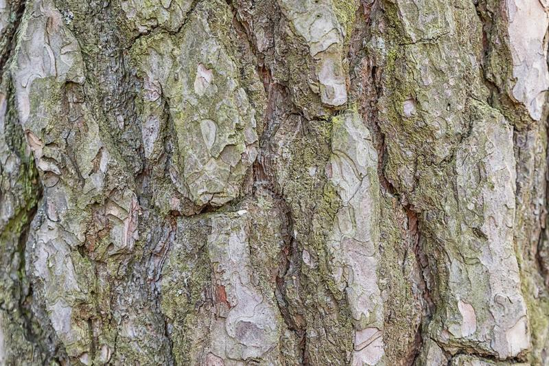Brown Drzewnej barkentyny tekstury Drewniana Niekończący się fotografia obraz royalty free