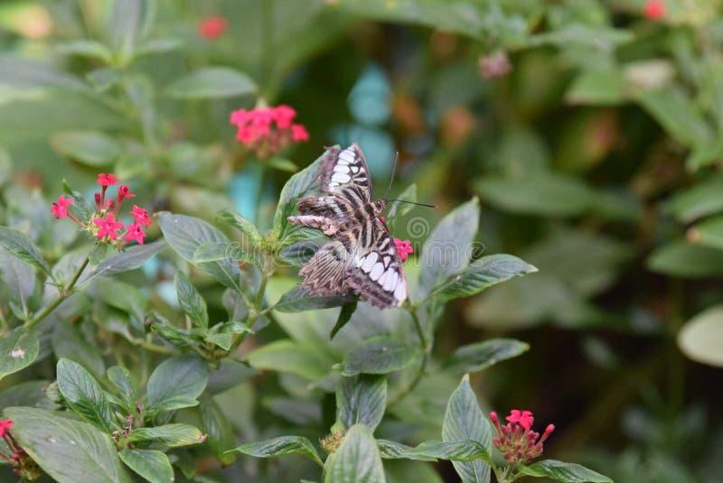 Brown e borboleta branca imagens de stock