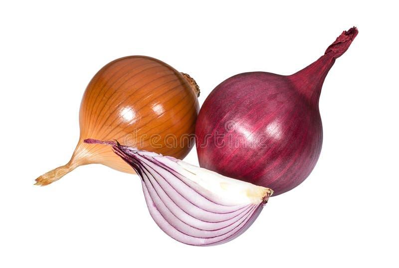 Brown e cipolla rossa su fondo bianco fotografia stock