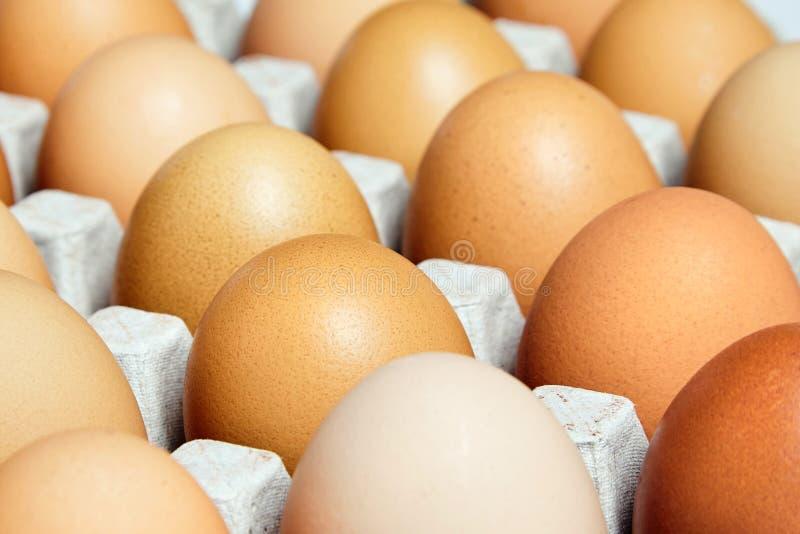 Brown e a galinha fresca salpicada eggs na bandeja do ovo do cartão imagem de stock royalty free