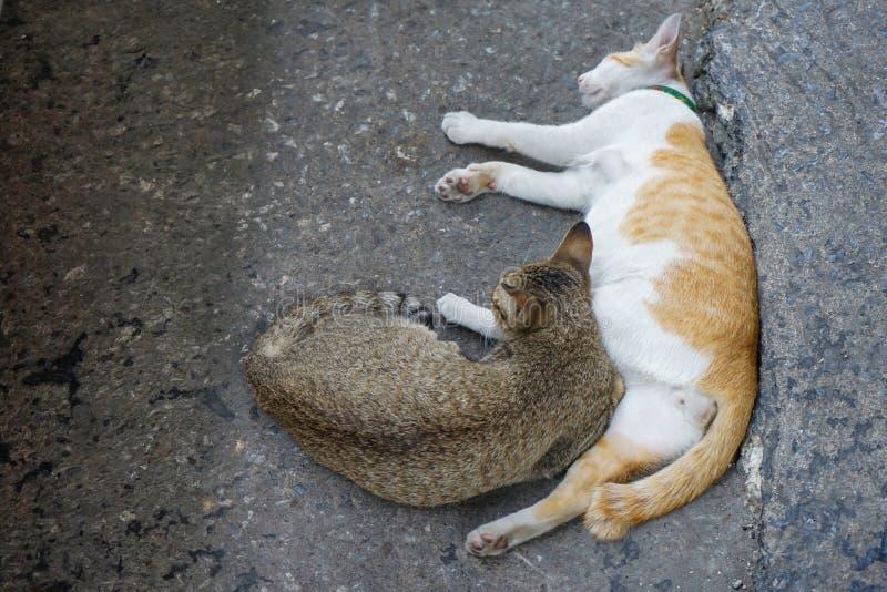 Brown e 2 gatos bonitos branco-alaranjados para sentar-se ao lado e dormir junto na rua foto de stock royalty free