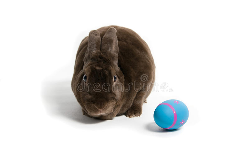Brown Easter Bunny stock images