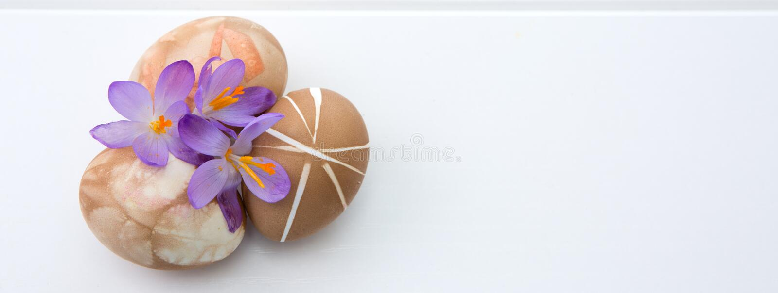 Three brown easter eggs and purple crocus . royalty free stock photos