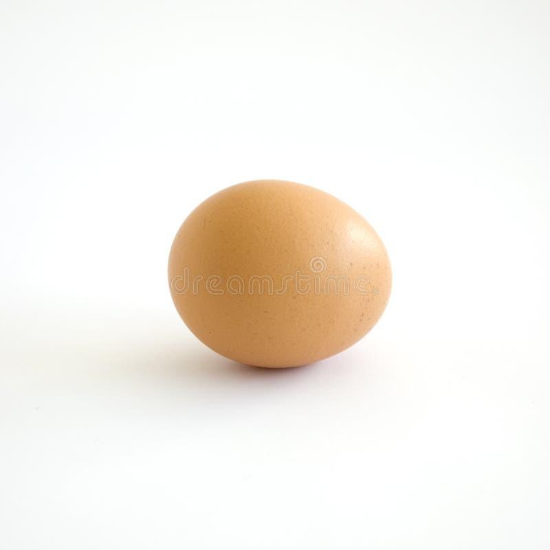 Brown egg stock photos