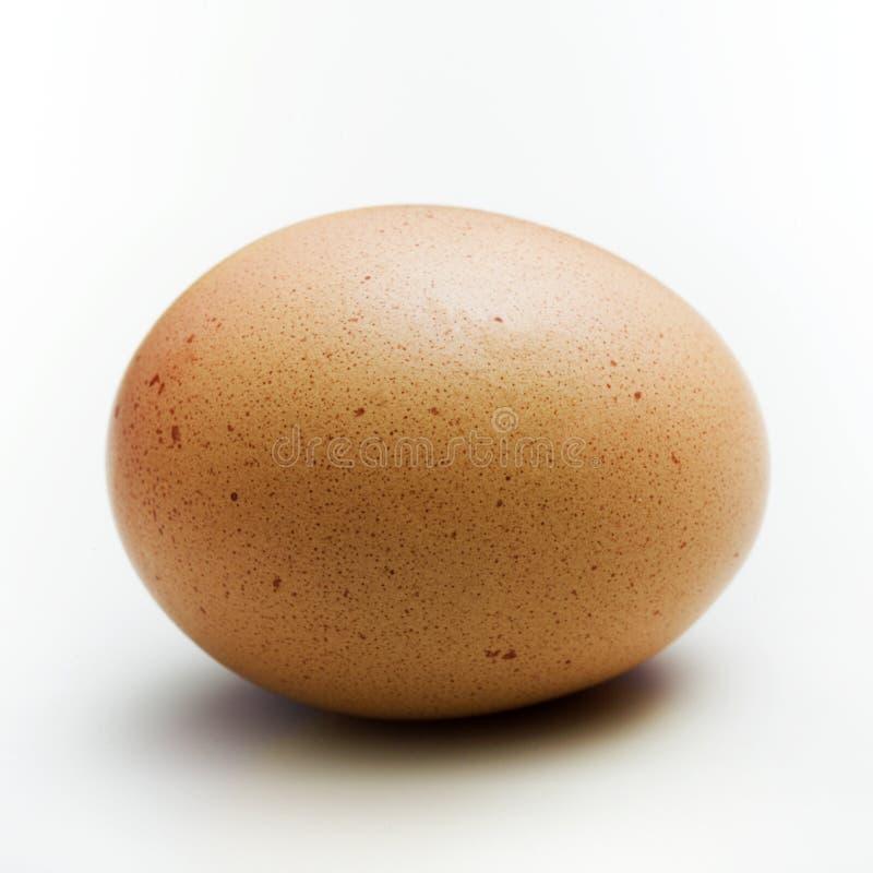 brown egg closeup royalty free stock photography