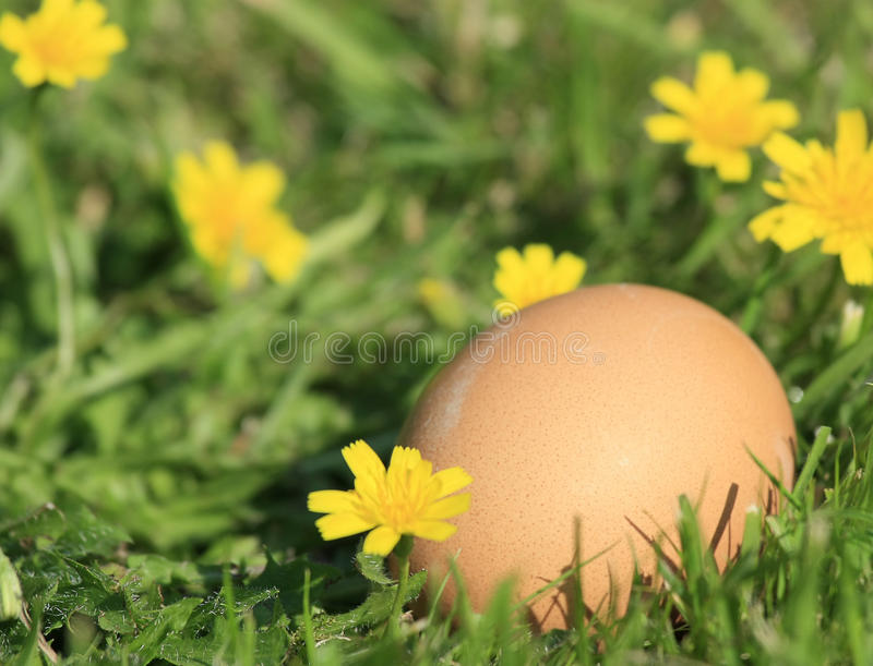 Brown Egg In The Grass Royalty Free Stock Images