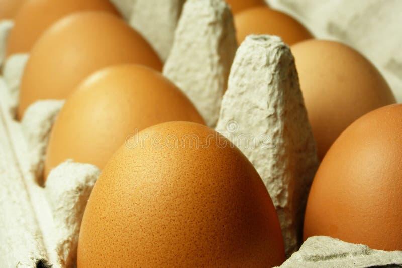 Brown eggs royalty free stock photos