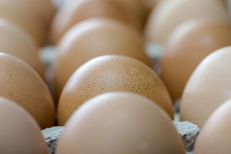 Brown eggs in cardboard container extreme macro crop. Horizontal crop with shallow depth of field royalty free stock images