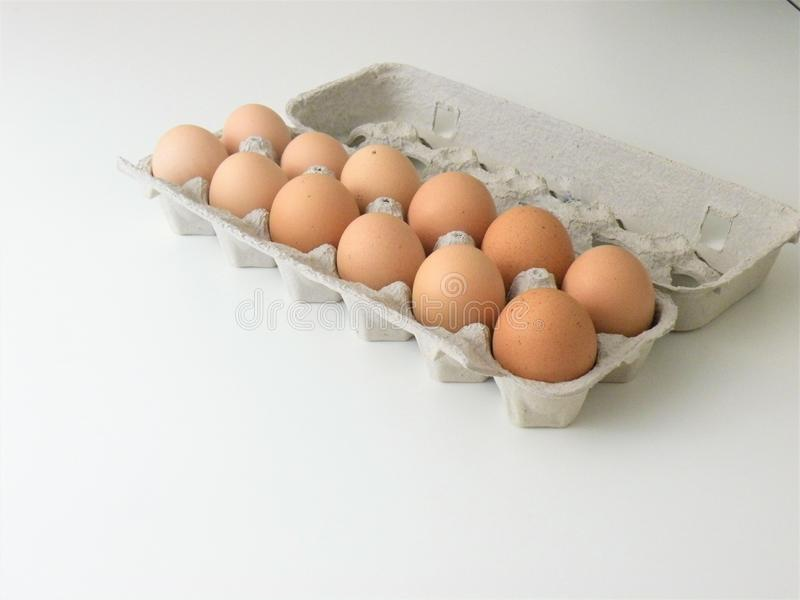 Brown Eggs In Egg Carton. Large cage free organic eggs inside opened egg carton. Large brown eggs stock images