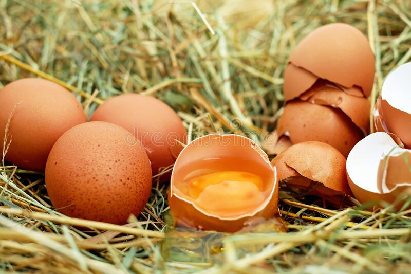 Brown Eggs in Nest stock photography