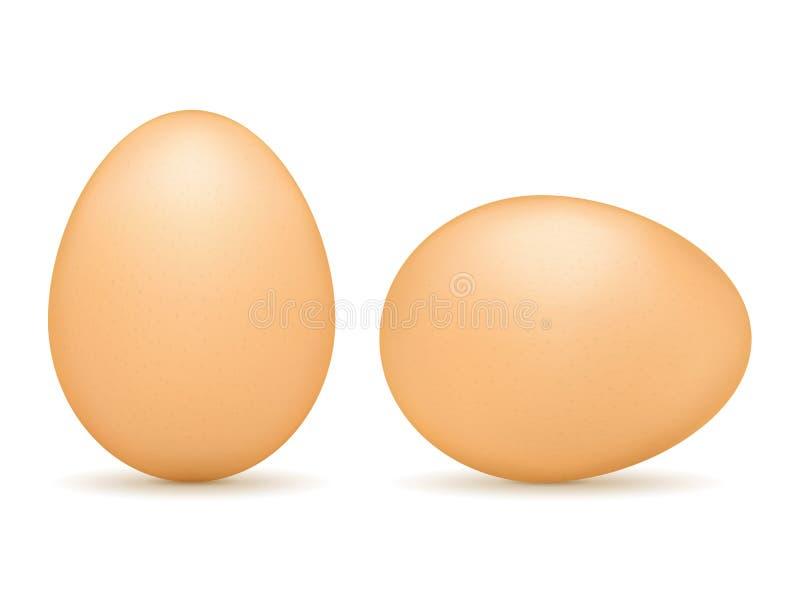 Brown Eggs vector illustration