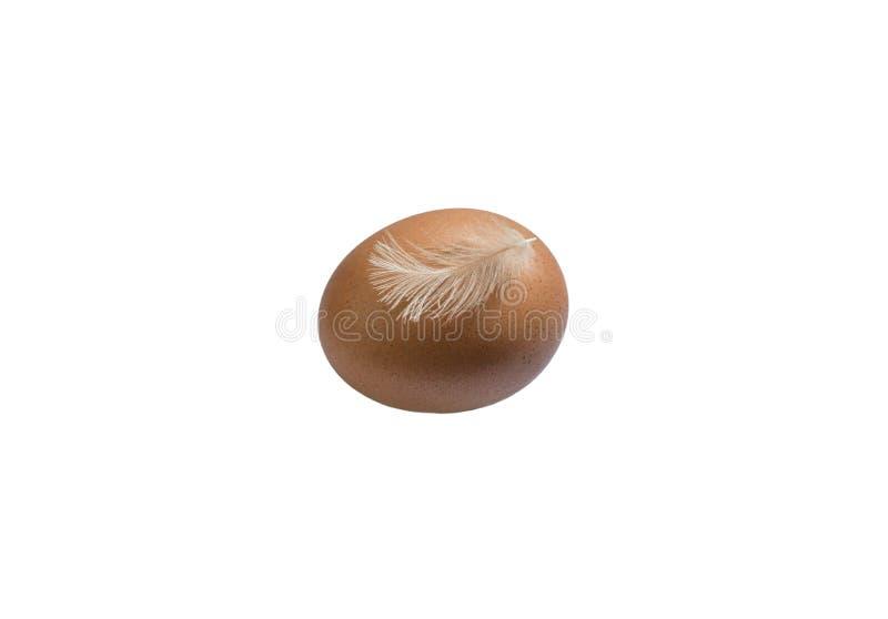 Brown-Ei auf einem weißen Hintergrund Huhn ist ein frisches Ei lizenzfreie stockfotos