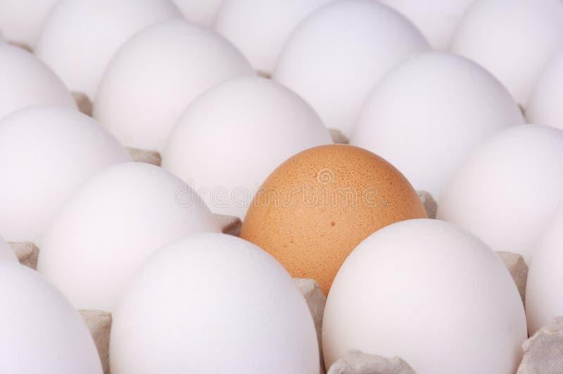 Brown-Ei unter weißen Eiern stockbilder