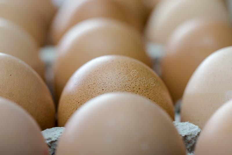 Brown-Eier in der Pappbehälterextremen Makroernte lizenzfreie stockbilder