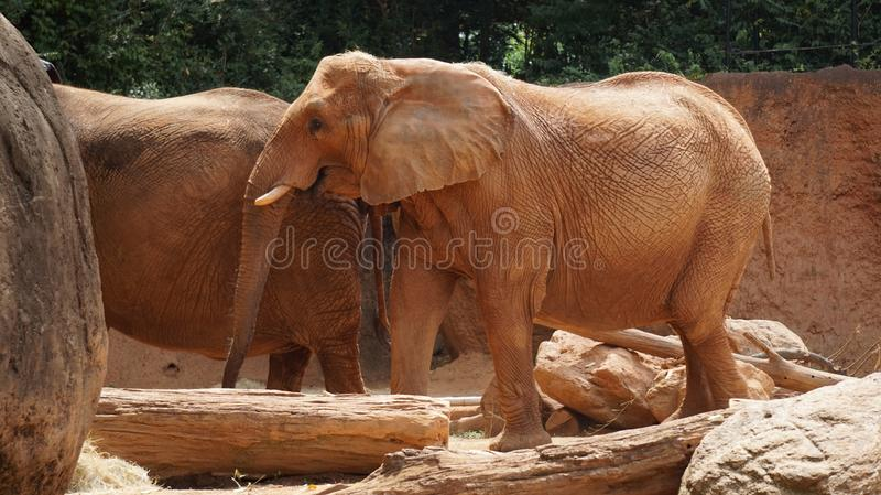 Brown Elephant Free Public Domain Cc0 Image