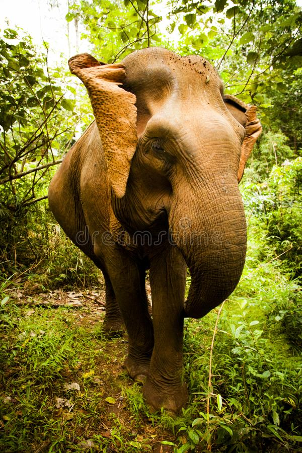 Brown Elephant Stands Between Green Trees and Plants Under White Sky stock photography