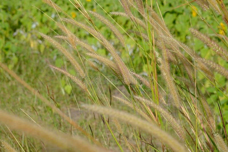 Brown engazonne le fond par les feuilles vertes image stock