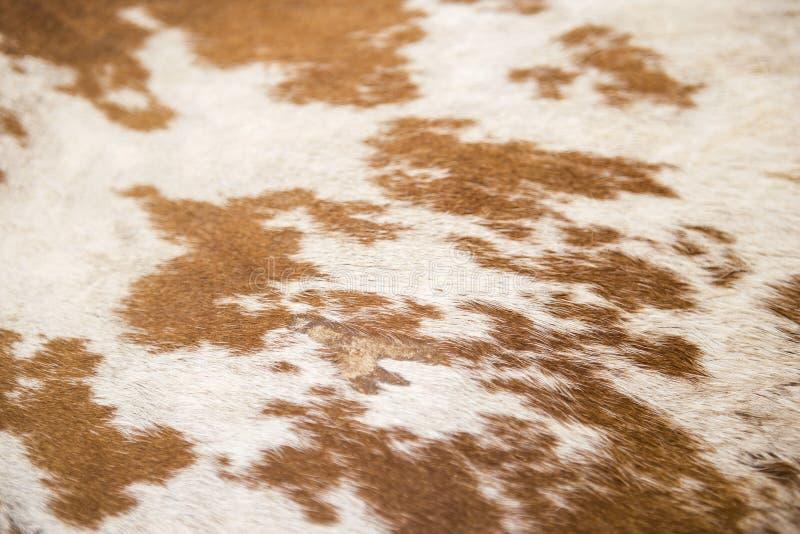 Brown et fond blanc de texture de peau de vache images libres de droits