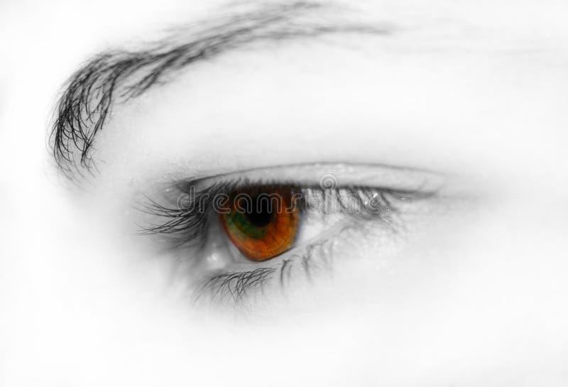 Brown eye royalty free stock photos