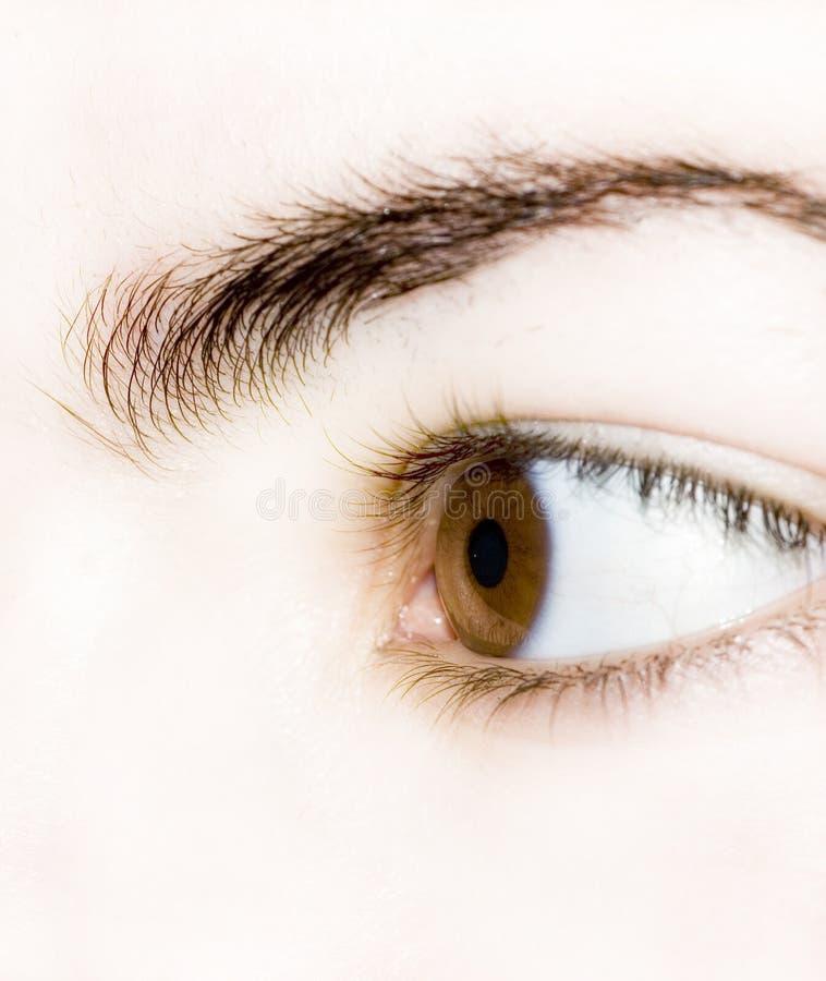 Brown eye royalty free stock image