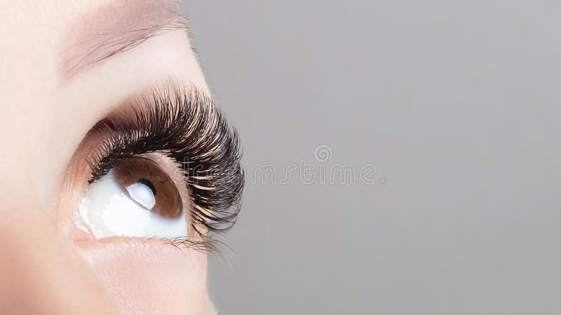 Brown eye with beautiful long lashes close-up, wide format. Brown color eye lash extension, 3D or 4D volume. Eyelash care,. Lamination, extensions, coloring royalty free stock photo
