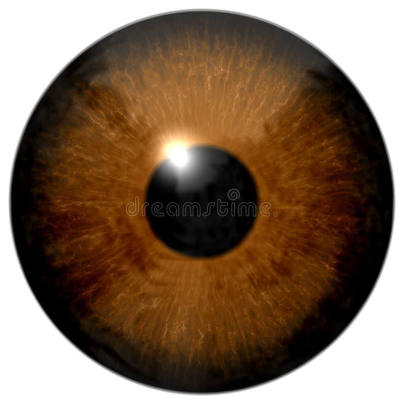 Brown eye illustration isolated on white. Brown eye (eyeball, retina, pupil, iris) illustration isolated on white background stock photo