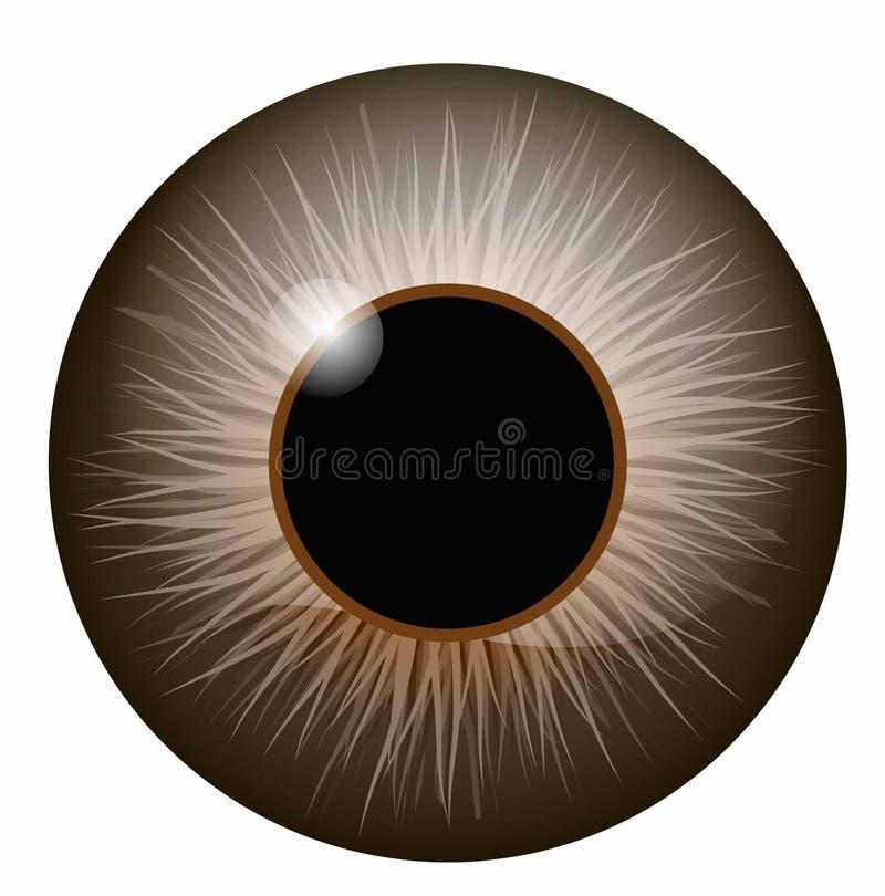 Brown eye iris vector illustration with highlights. Brown eye iris vector illustration royalty free illustration