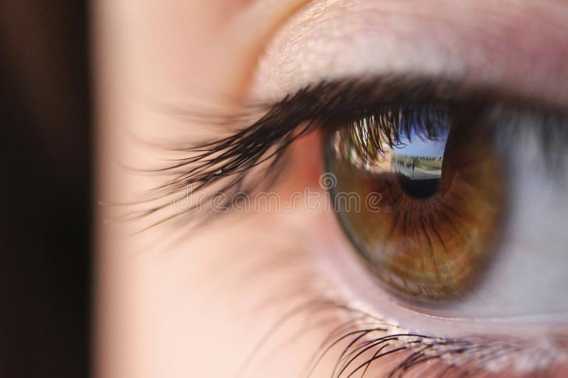 brown eye with street reflection stock photography