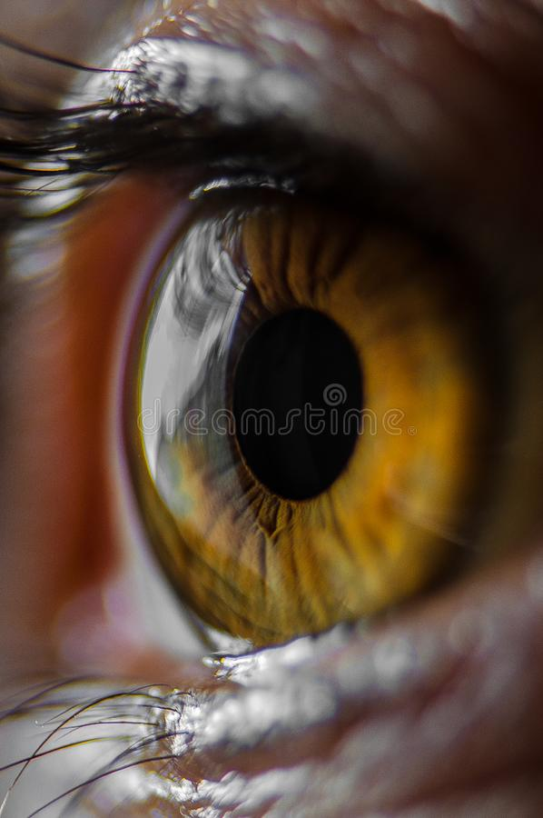 Brown eyed girl royalty free stock photography