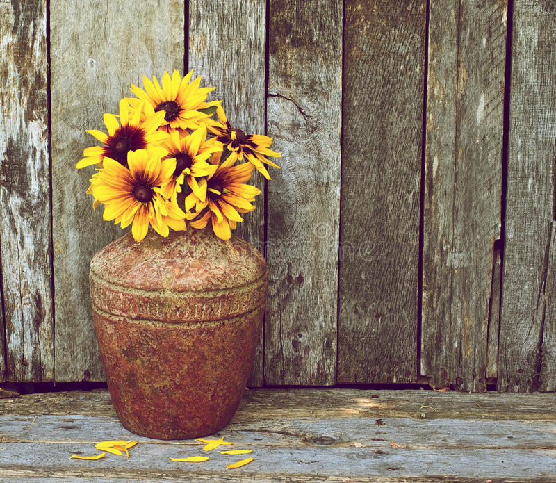 Brown eyed susans in vase on wood. Richly colored vintage style image of beautiful brown eyed Susan flowers in a rustic vase on a grunge wood backdrop with copy stock images