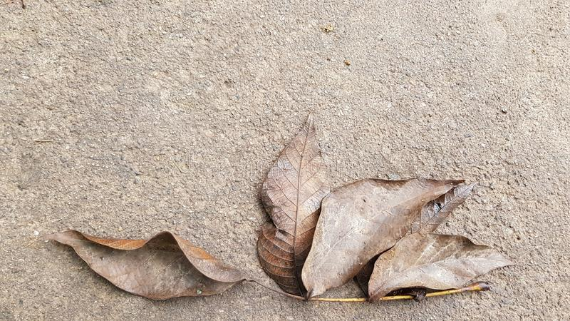Brown fall leaves of walnut tree on wet grey cement floor background royalty free stock photography