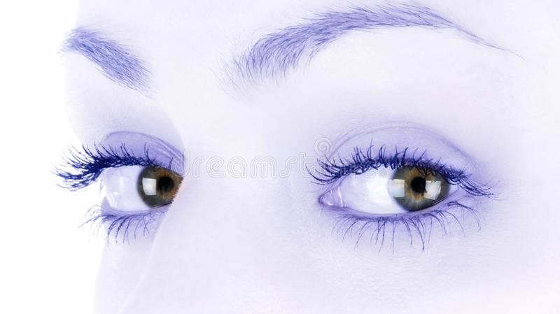 Brown female eyes royalty free stock image