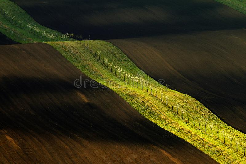 Brown field with green belt of trees in spring waves. In warm evening sun stock images