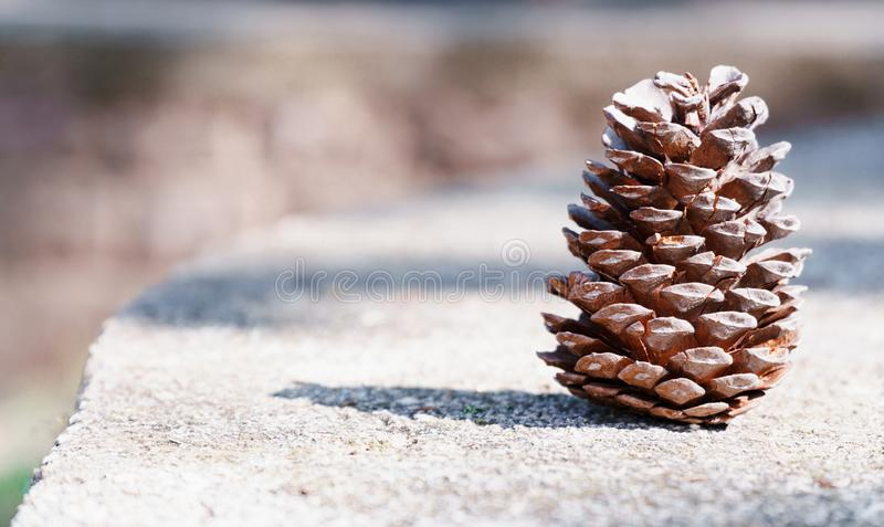 Brown fir cone without seeds on the stone. Brown fir cone without seeds on gray stone close up royalty free stock images