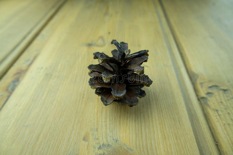 Brown fir cone on wooden table close up. Opened fir cone stock photography