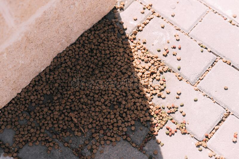 Brown food for cats or dogs scattered on the asphalt, in the afternoon with a shade from the sun, outdoor. Taking care of street a. Nimals. Food for stray cats royalty free stock image
