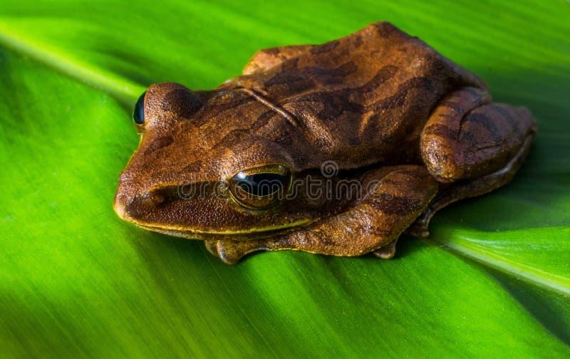 Brown Frog Free Public Domain Cc0 Image