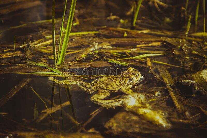Brown Frog Beside Green Grass Free Public Domain Cc0 Image