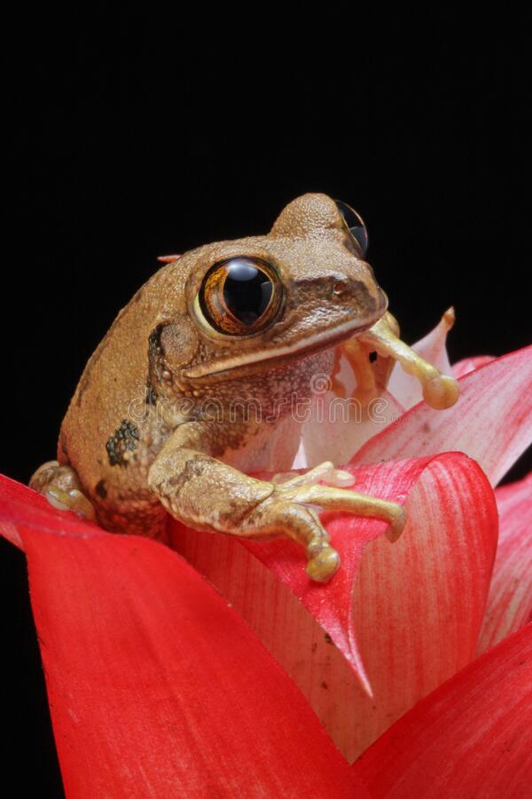 Brown Frog On Red Petal Flower Free Public Domain Cc0 Image
